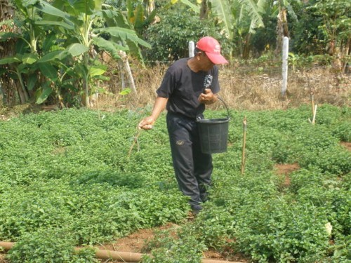 เกษตรพอเพียงกับการทำผักสวนครัว