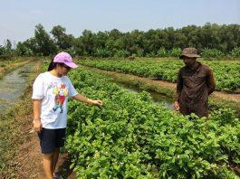 ปลูกมะลิเก็บดอกขาย สร้างรายได้ 1,000,000 บาทต่อเดือน (หนึ่งล้านบาทต่อเดือน)